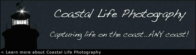 Visit Coastal Life Photography.com